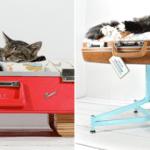 DIY panier à chat