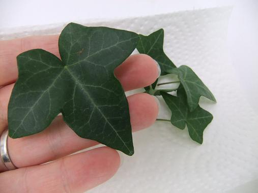 feuilles 6