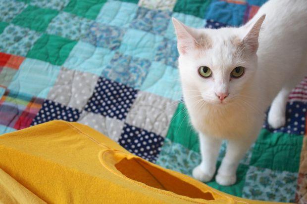 cabane chat t-shirt