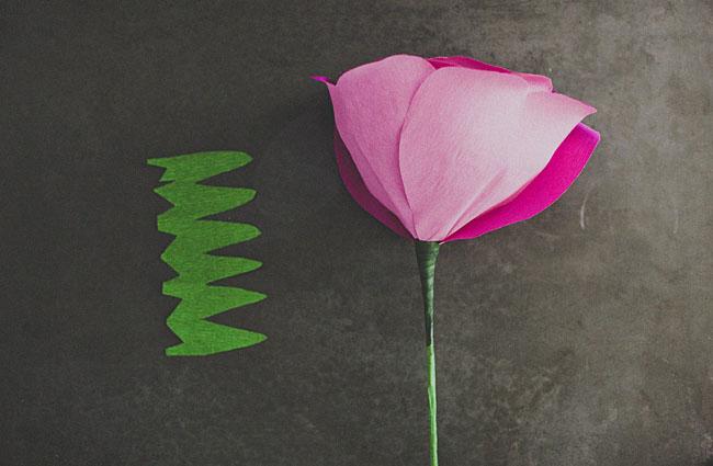 rose géante 11
