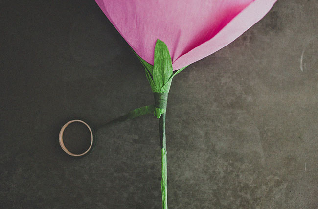 rose géante 12