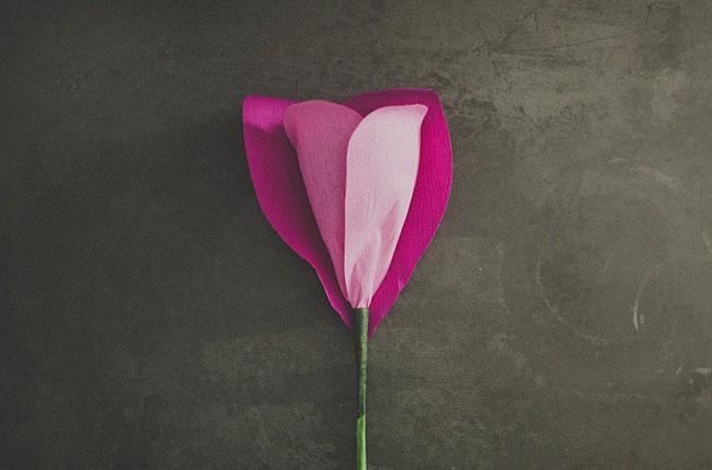 rose géante 9