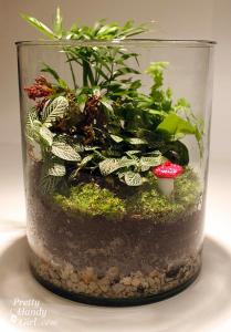 terrarium 16