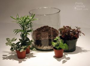 terrarium 4