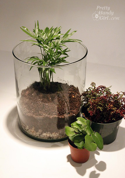 diy un terrarium dans un verre. Black Bedroom Furniture Sets. Home Design Ideas
