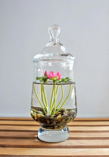 terrarium d'eau 4