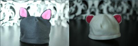 oreilles chat oreilles ours